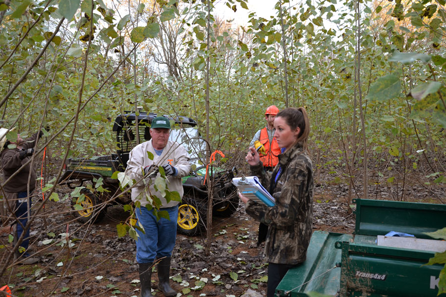 Two men and a woman take inventory of the poplar trees.