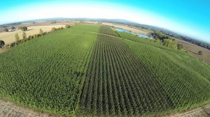 An ariel view of the Jefferson Poplar Plantation in Oregon.