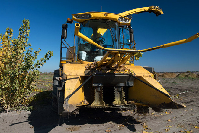 The Case New Holland FR 9000 harvester parked next to a poplar tree.