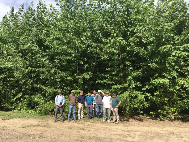A tour group of employees from GreenWood Resources standing in front of the poplar trees at the Jefferson demonstration site.