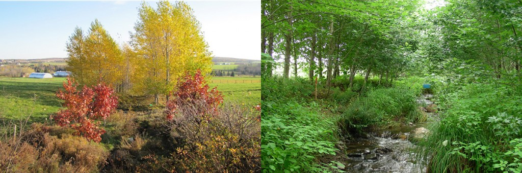 The left photograph shows the outside view of the buffer and the right photograph shows the stream inside the buffer.