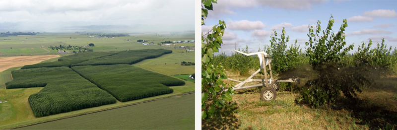 On the left, an aerial view of dark green poplar trees growing in large, rectangular patches amid green fields with hills in the background. On the right, an image of a white cart spraying biosolids on the green, leafy poplar trees.