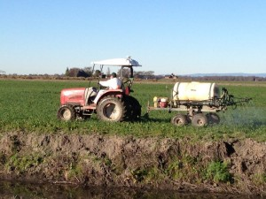 A red tractor towing a spray cart through the Clarksburg site in order to prepare it for planting.