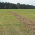 The empty Pilchuck field, all grass except for one strip running across it that has been tilled up to test the soil.