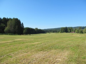The Pilchuck demonstration site, an empty field of grass bordered by evergreen trees, before the poplar trees were planted.