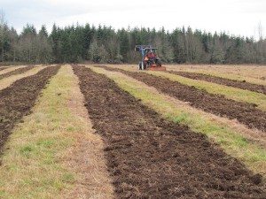 Landscape view of a blue tractor tilling brown rows of soil in the grassy Pilchuck field so that the poplar trees can be planted.