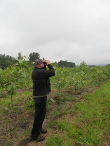 Brian Moser looking through binoculars at the Pilchuck demonstration site.