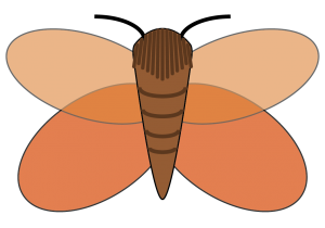 Graphic of a poplar satin moth, links to poplar pest sheets.