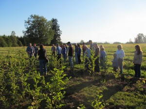 21 people, including a couple of children, gathered in the Pilchuck poplar field. The trees are between width and shoulder height and the sun is setting bathing them in a golden glow.