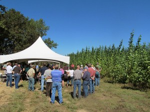 The field tour group gathered around the white tent and tables and chairs set up in front of the green, leafy poplar trees.