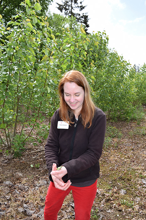 Patricia Townsend carefully holding a small green frog found at the Pilchuck site in her hands. The poplar trees are in the background.