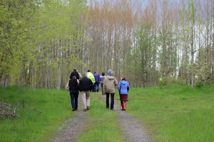 A group of people, including Patricia Townsend walking down a path away from the camera and towards the tall poplars growing on the Duvall landfill.