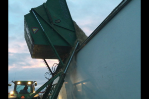 The green tractor dumping the bin of harvested poplar chips into the larger truck that will transport them to the lab or biorefinery.