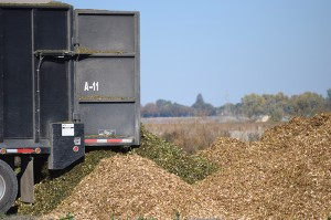 Piles of woodchips spilling out of the back of the truck that collected them from the harvester.