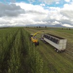 An aerial rear view of the harvester and truck cutting down the trees at Hayden during that field's first harvest.