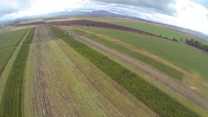 An aerial view of the first Hayden harvest; you can see the difference between the brown, flat rows of dirt where the trees have already been harvested and the green rows that still have trees.