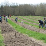 A large group of workers planting poplars at the Pilchuck site.