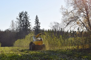 The harvester going down the rows at the Pilchuck field during the first harvest.