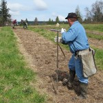 Workers make holes in the row for the poplar cuttings to be planted into.