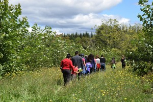 The promotores and their families walking through the field of grass and wildflowers (away from the camera) next to the poplars at the Pilchuck site.