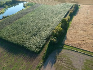Aerial view of the Jefferson demonstration site. Three varieties of poplar are distinctly visible from changes in color in the field. on the left side, is a body of water and the field is bordered on the other three sides by brown fields.