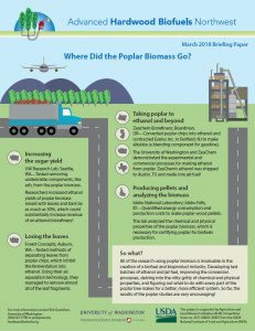 Where Did the Poplar Biomass Go?