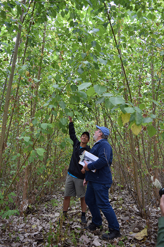 A young man and an older man look up at the branch of a poplar tree.