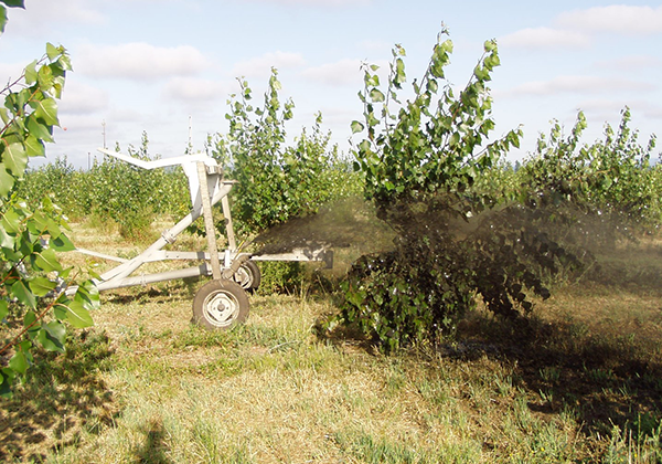 Farming equipment spraying liquid biosolids directly onto a poplar tree.