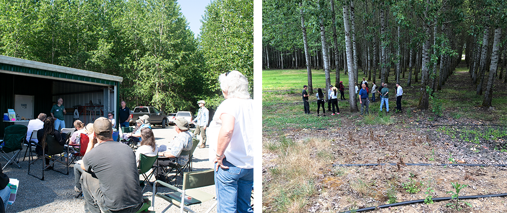 Left - A group of people listening to a presenter outside. Right - A group of people standing in a poplar plantation,