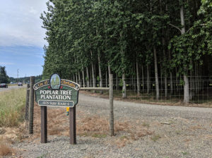 City of Chehalis Poplar Tree Plantation
