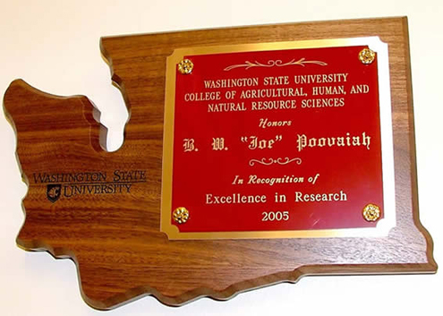 Excellence in Research award