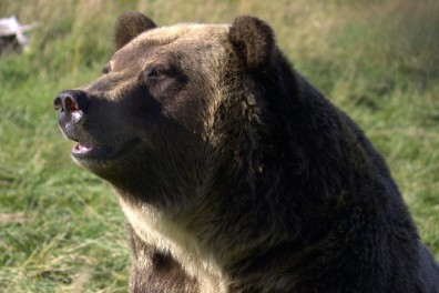 A bear sitting looking into the sun.