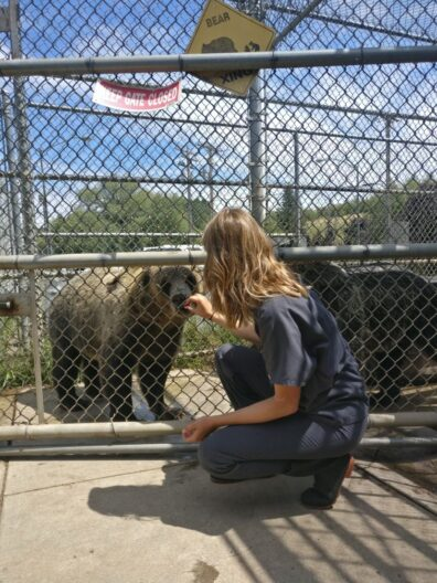 Bear Center volunteer Claire giving Willow bear a treat.