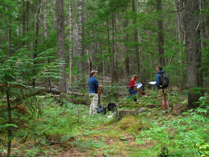 students measuring forest
