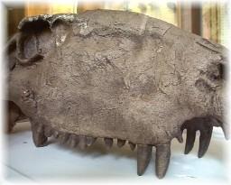 reptile fossil