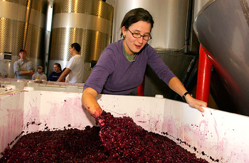 Student with their hand in a vat of grapes