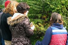 Women examining a tree