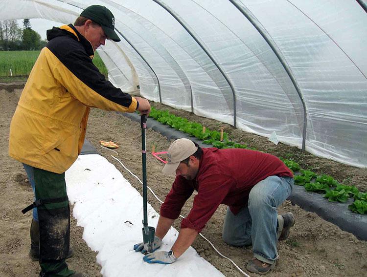 Men preparing garden beds for planting