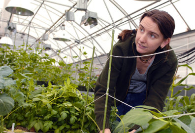 Horticulture graduate student in greenhouse.