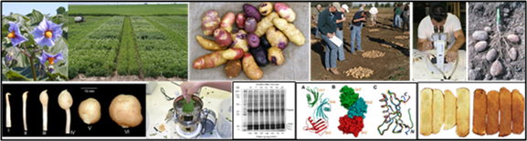 Images of potatoes and researchs