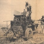 This is an image of harvesting wheat plots.