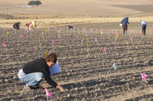 This is an image of people collecting samples in a field.