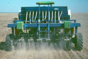 This is an image of direct seeding spring wheat into standing stubble with a Cross-slot.