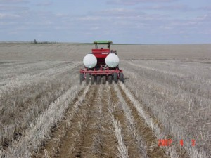 This is an image of direct seeding spring wheat into standing stubble