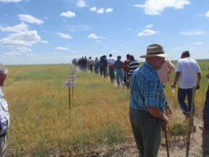 This is an image of people touring camelina plots at a Field Day.