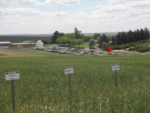 This is an image of fields and the Station at a Field Day.
