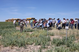 Crowd at the winter pea field tour.