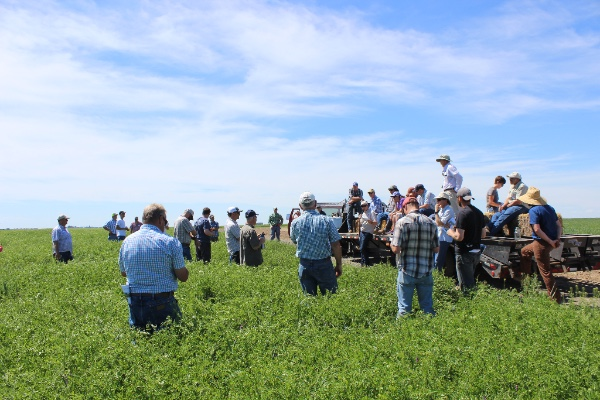 A large group of people in a green field with some people on the back of a flatbed truck