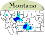 Montana Distribution