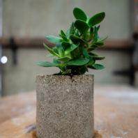 PlantPot1Color